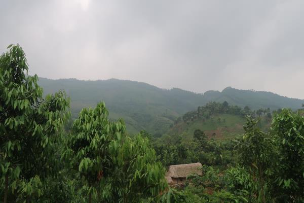 Đi Giáp Lào Khai Thác Và Thu Mua Mật Ong Rừng 2016